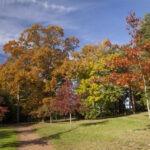 Comment donner vie et couleurs à vos photos d'automne