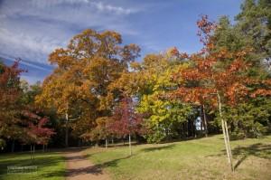 photo-automne-S.Grossin-1-2