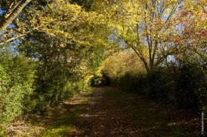 photo-automne-S.Grossin-5