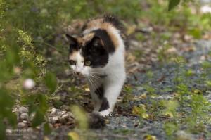 Quand votre sujet se déplace, ici le chat vient vers nous, le mode AF-C ou AI Servo est nécessaire
