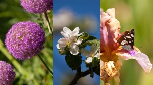 Priorité diaphragme ou priorité vitesse, vous aurez de belles photos de printemps