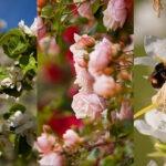 Comment réussir ses photos de printemps ?