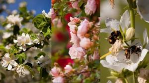 Réussir ses photos de printemps