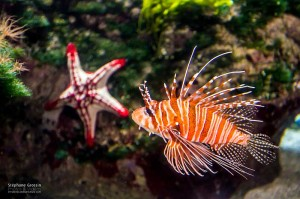 Photo-Aquarium-LR-17
