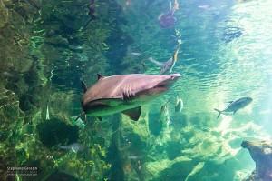 Photo-Aquarium-LR-23