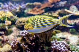 Photo-Aquarium-LR-25
