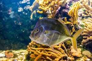 Photo-Aquarium-LR-5