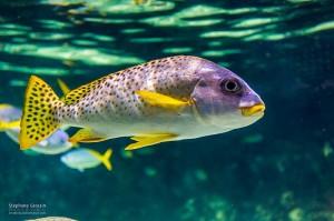 Photo-Aquarium-LR-8