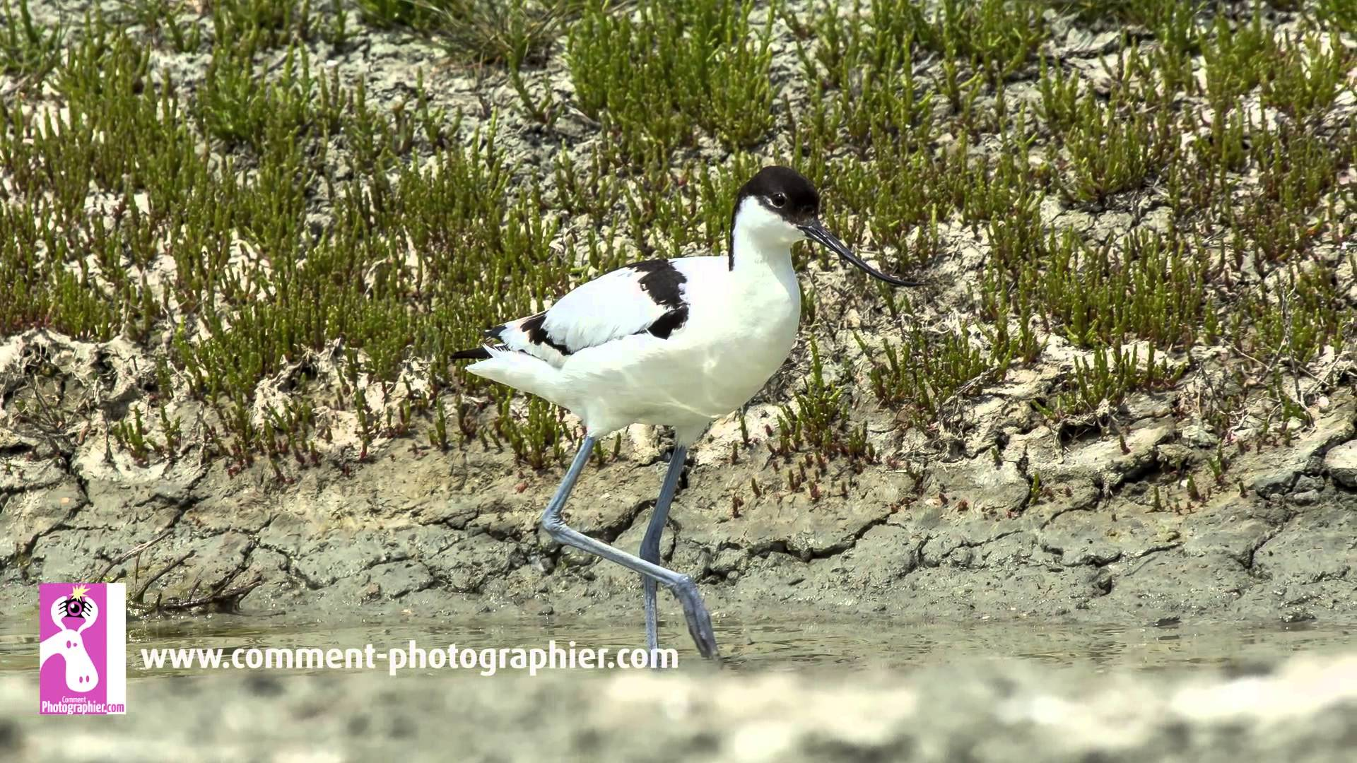 Comment faire des photos d'oiseaux et de nature
