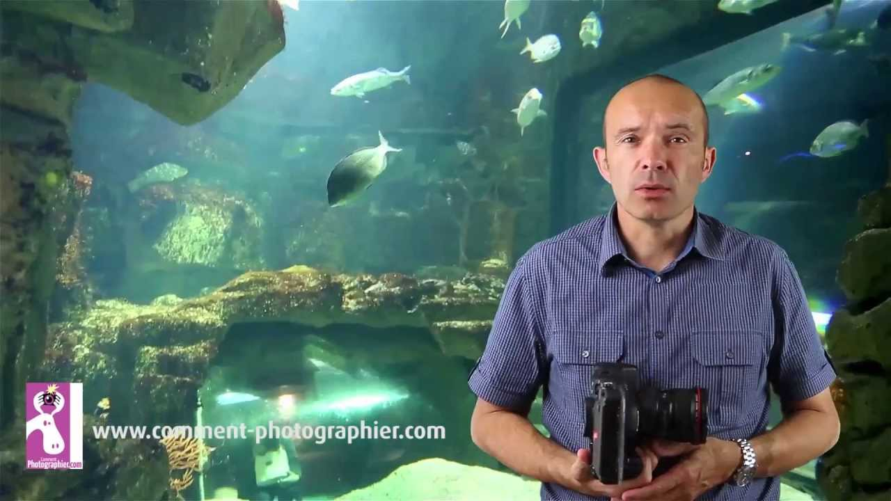 Comment faire des photos d'aquarium
