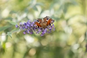 La photographie d'insectes vivant sera difficile avec le mode scène macro.