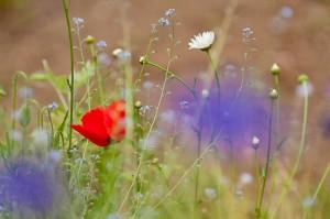 Fond-Fleurs