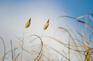 Fond-Plantes