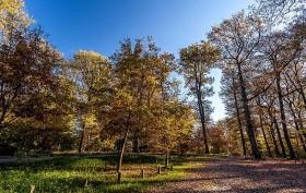 Réussir ses photos de paysages d'automne