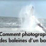 Comment photographier des baleines d'un bateau