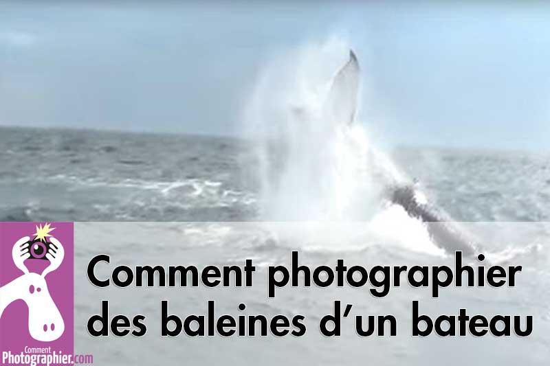 Comment-photographier-des-baleines-d-un-bateau
