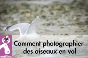 Comment photographier des oiseaux en vol
