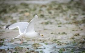 oiseaux en vol21