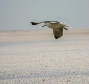 oiseaux en vol33