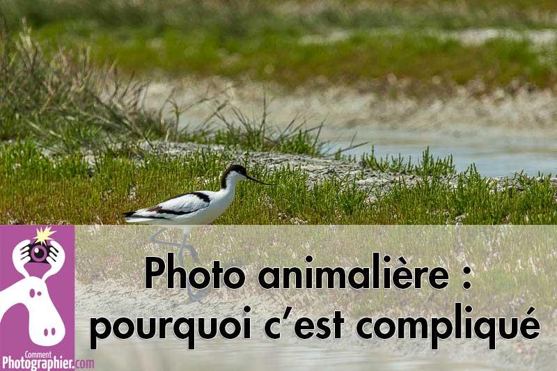 Photo animalière : pourquoi c'est compliqué