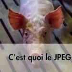 À quoi sert le JPEG ?