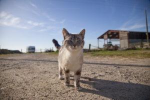 Comment photographier vos animaux de compagnie