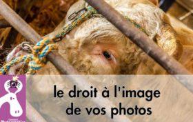 Petit rappel sur le droit à l'image de vos photos