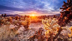 Réussir ses photos de paysages Cholla Cactus Garden 18