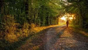 Réussir ses photos de paysages Chemin Forêt 29