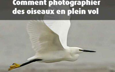 Photographier des oiseaux en vol